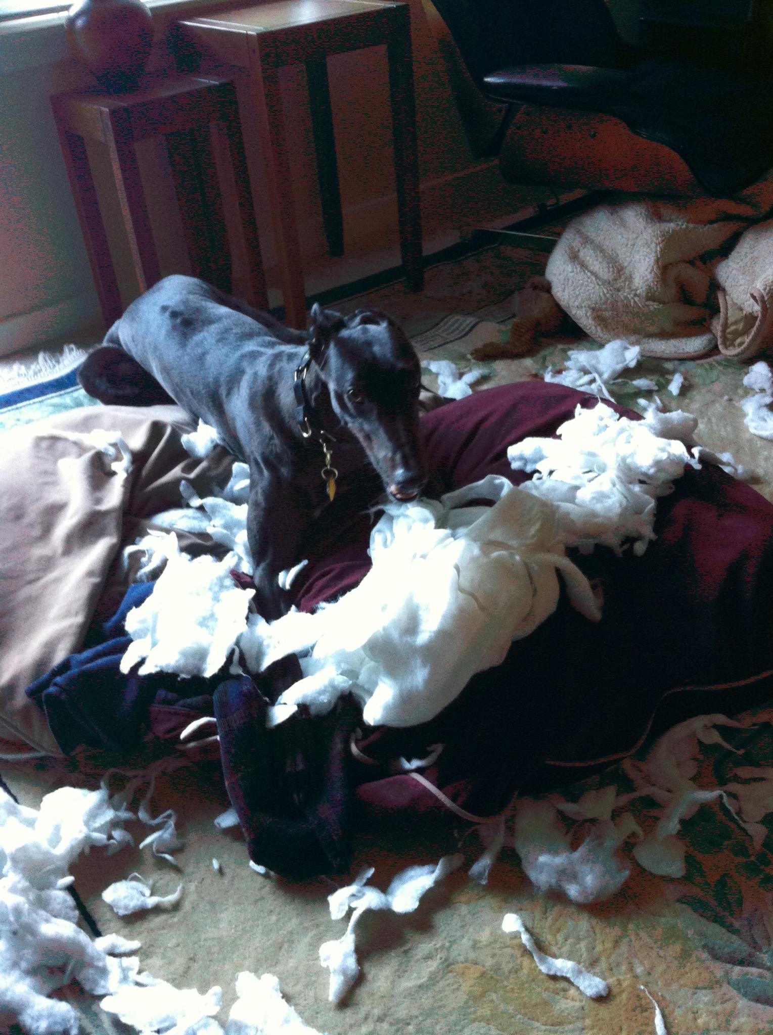 dog beds for greyhounds - noten animals